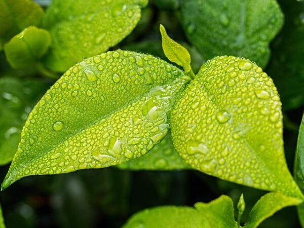 Ekologiczne produkty do życia codziennego – kierunek rozwoju na najbliższe lata
